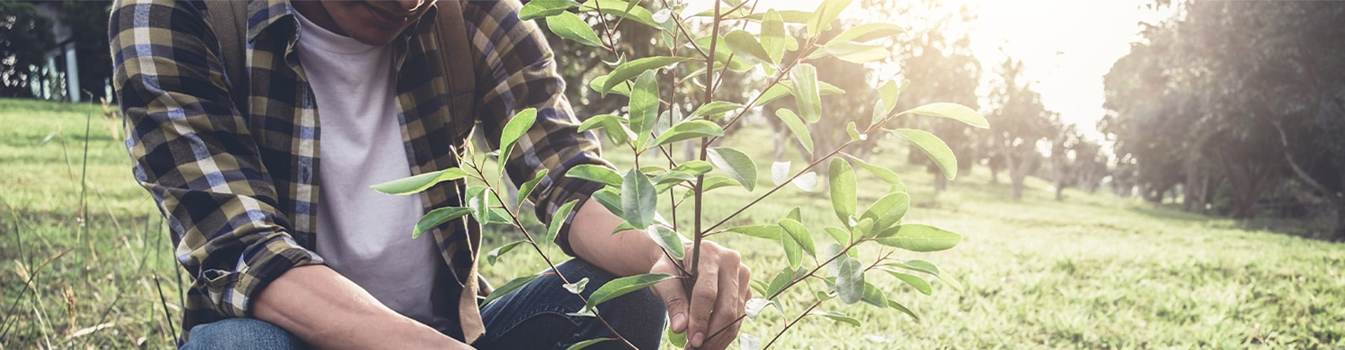 Helping our planet with Sociabble Trees
