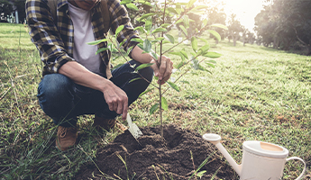 Sociabble Trees: Play a Part in Helping Our Planet
