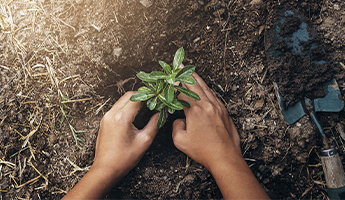 Carbon Offset: A Big Thank You to Our Sociabble Trees Participating Clients